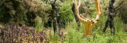 L'arbre d'or du val sans retour