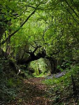 Un chemin creux en Bretagne