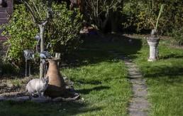 Un chat au jardin